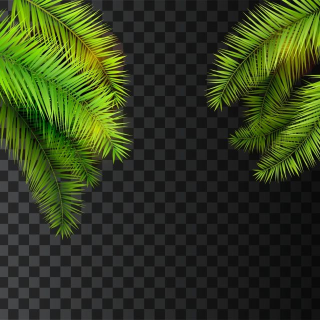 Summer Tropical Palm Leaves Hanging On Transparent Background Palm Vector Background Png And Vector With Transparent Background For Free Download Tropical Background Leaf Background Transparent Background