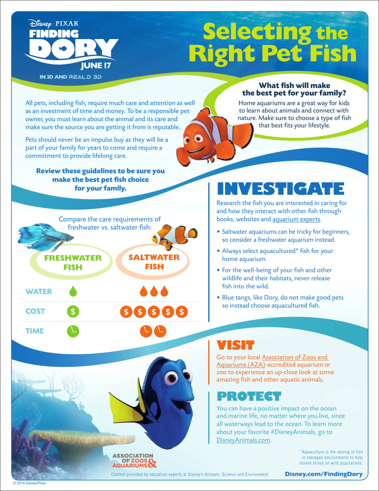 Free Finding Dory activities and craft idea!  www.dandelionmoms.com - Out in theaters 6/17!