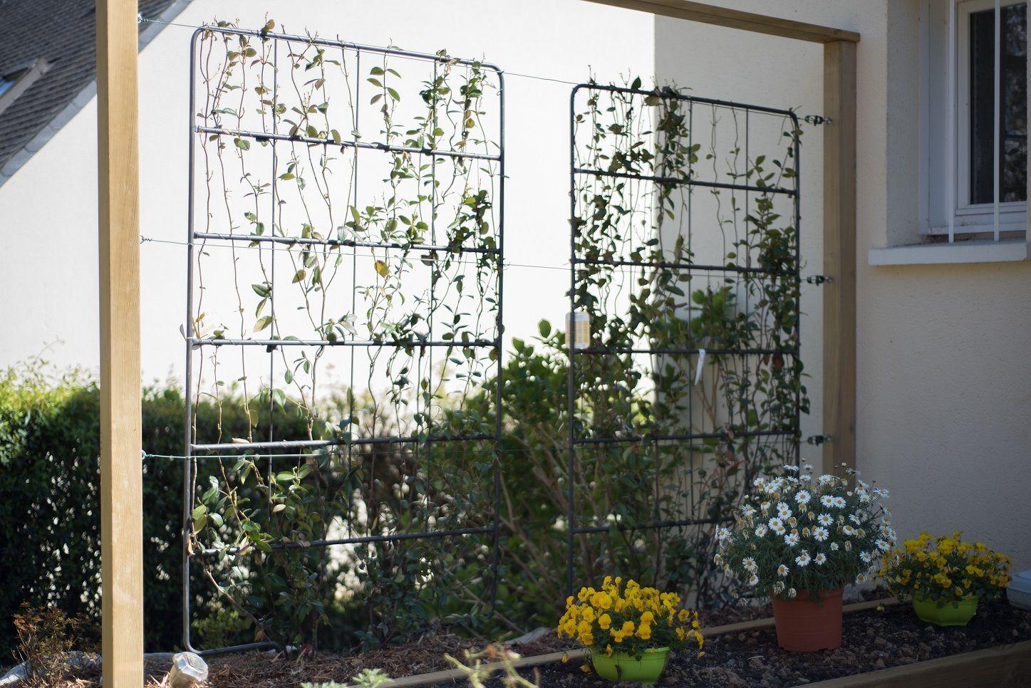 Support Pour Plantes Grimpantes Plante Grimpante Parterre De Fleurs Support Plante Grimpante
