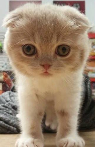 Page Not Found Black And White Kittens White Kittens Orange Tabby