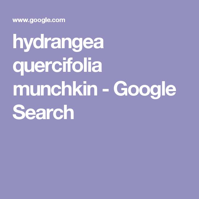 hydrangea quercifolia munchkin - Google Search