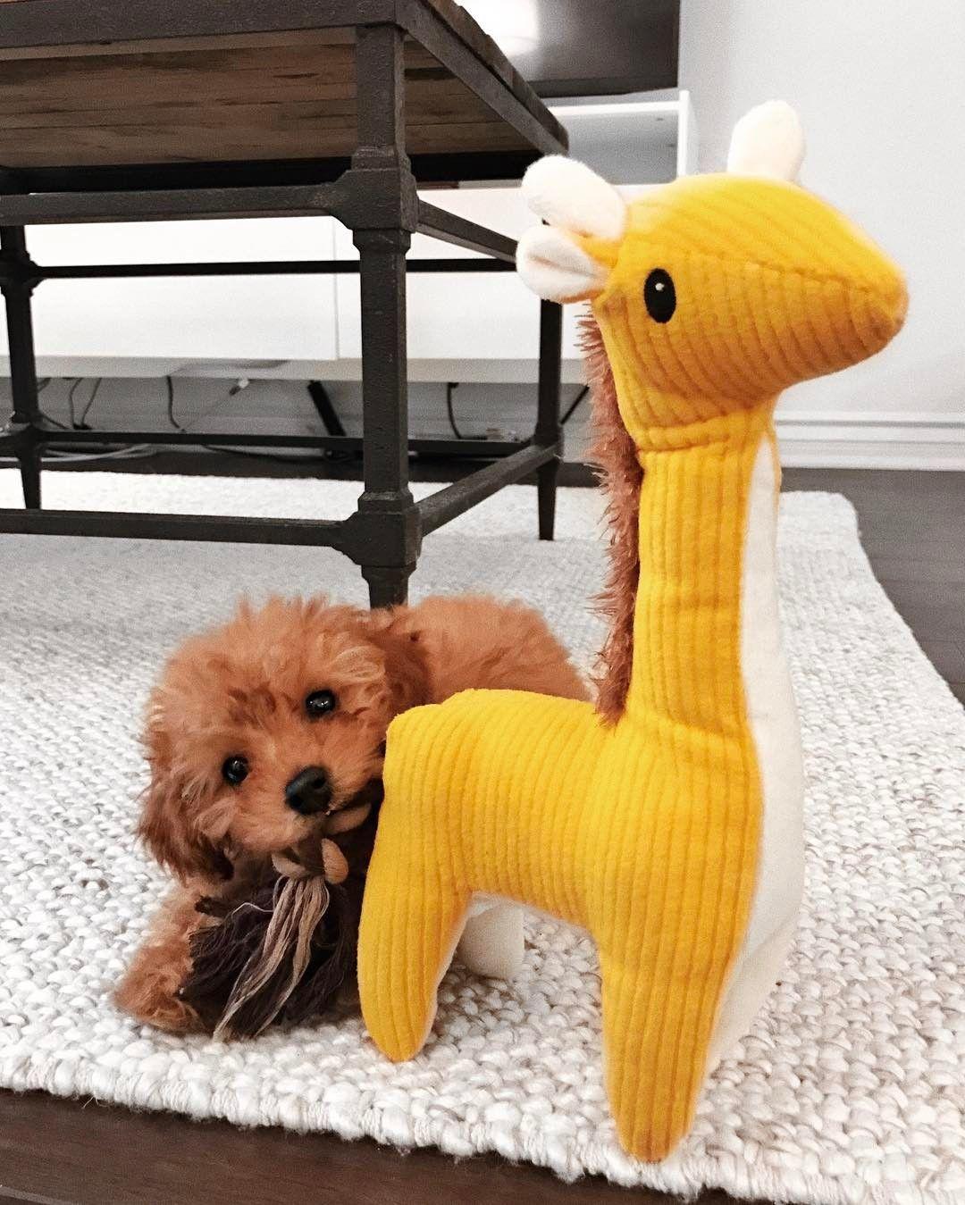 Milo Conte (milomunchkin) Cute baby animals, Cute