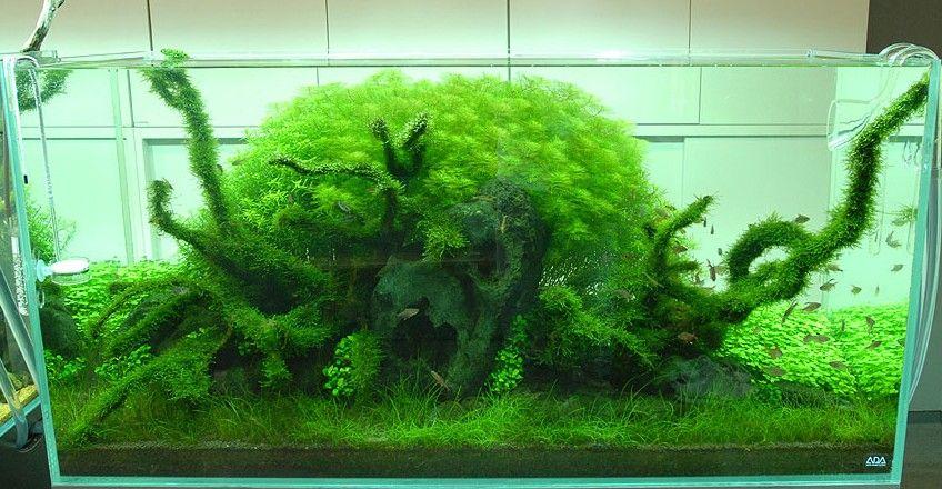 Nature Aquariums And Aquascaping Ideas By Takashi Amano   Image 09 :  Excellent Amano Aquascape