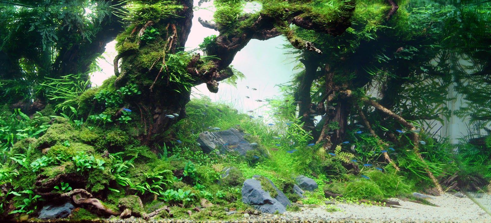 Background Poster Pics: Background Layouts For Aquarium ...