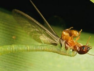 Real Monstrosities What Do You Call A Fly With No Wings Rule