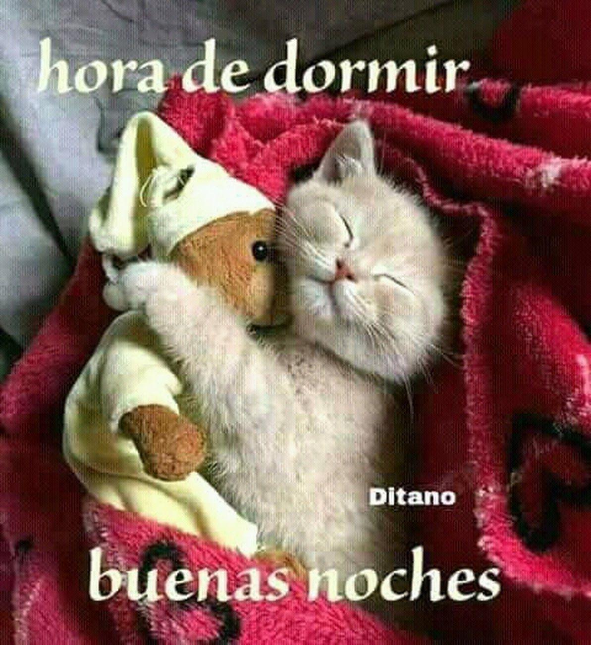 Sign In Gatos Bonitos Gato De Buenas Noches Animales Bonitos