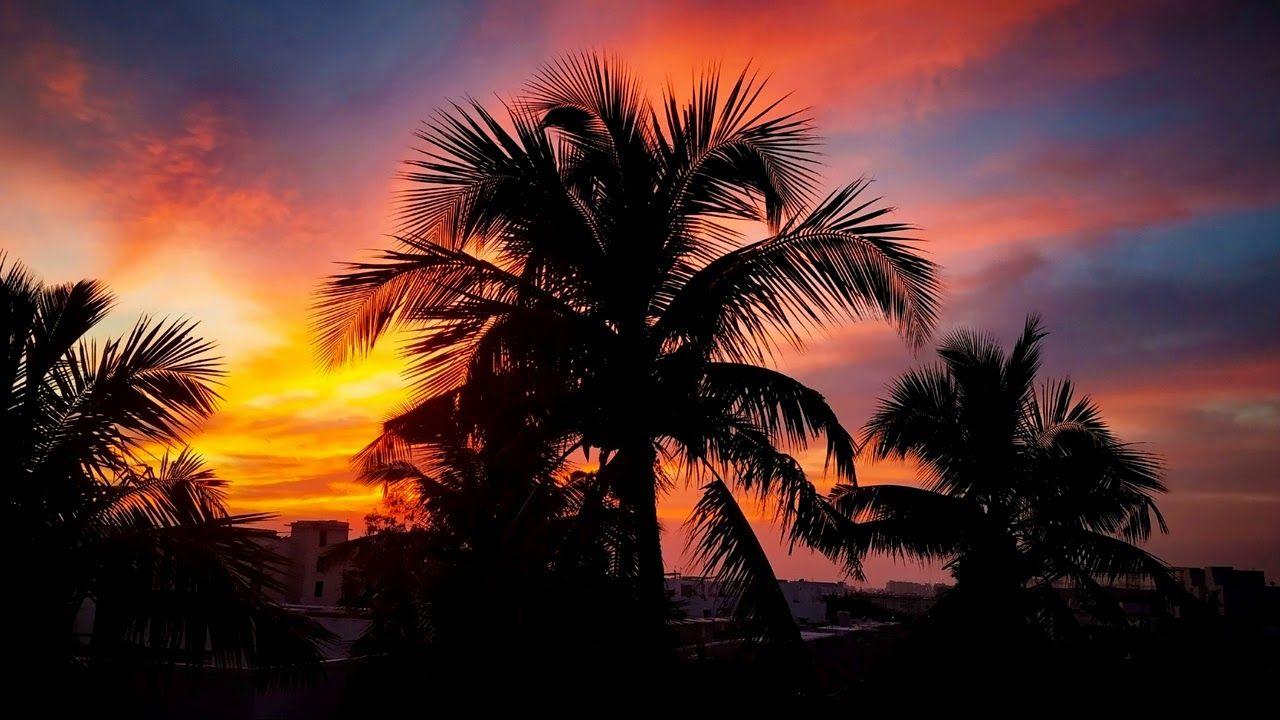 Картинка закат. Пальмы, облако, солнечный лучик, солнце ...