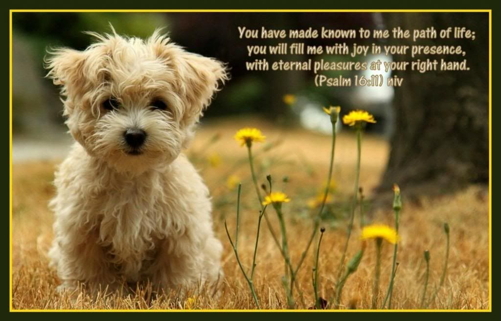 Pin By Becky Crippen On Inspirational Dog Adoption Near Me Animal Wallpaper Small Dog Adoption
