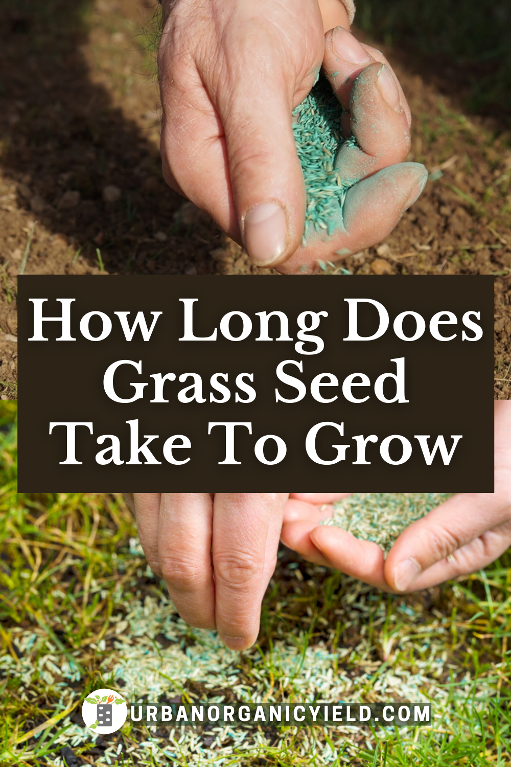 How Long Does It Take For Grass Seed To Grow Planting Grass Grass Seed Overseeding Lawn