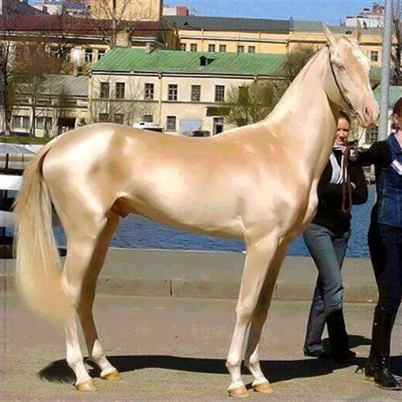 شاهد أجمل خيل في العال مدونة مروج الجنة Most Beautiful Horses Unusual Horse Akhal Teke Horses