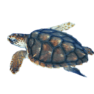 Sea Turtle Sea Turtle Sea Turtle Art Turtle