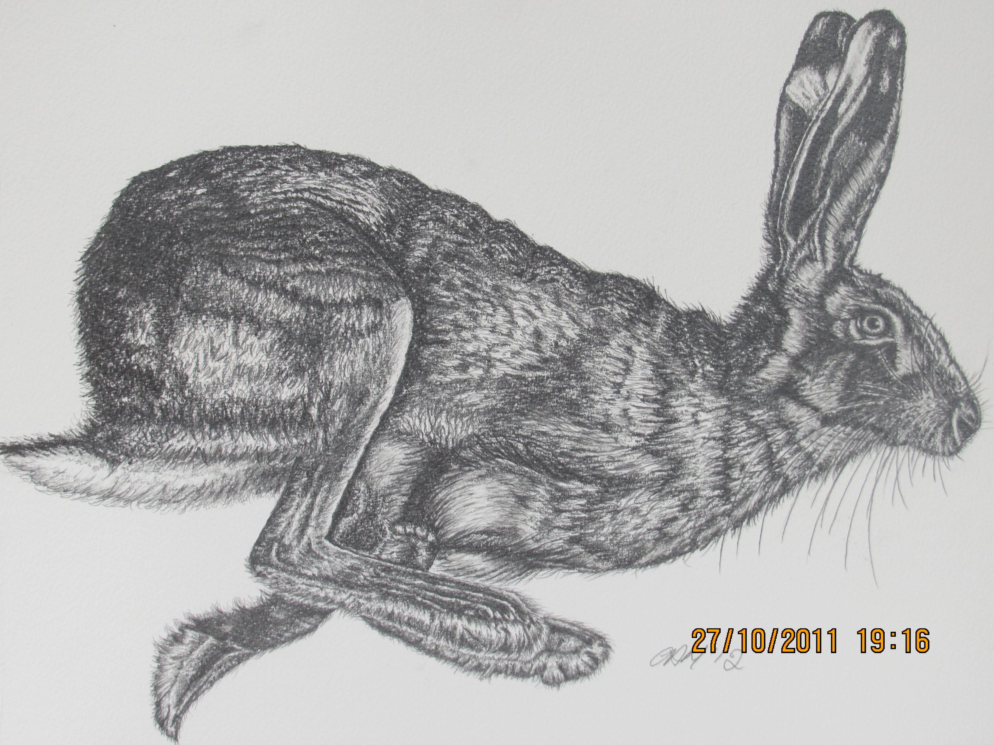British Brown Hare - Cath Hodsman   mostly cool ♡   Pinterest ...