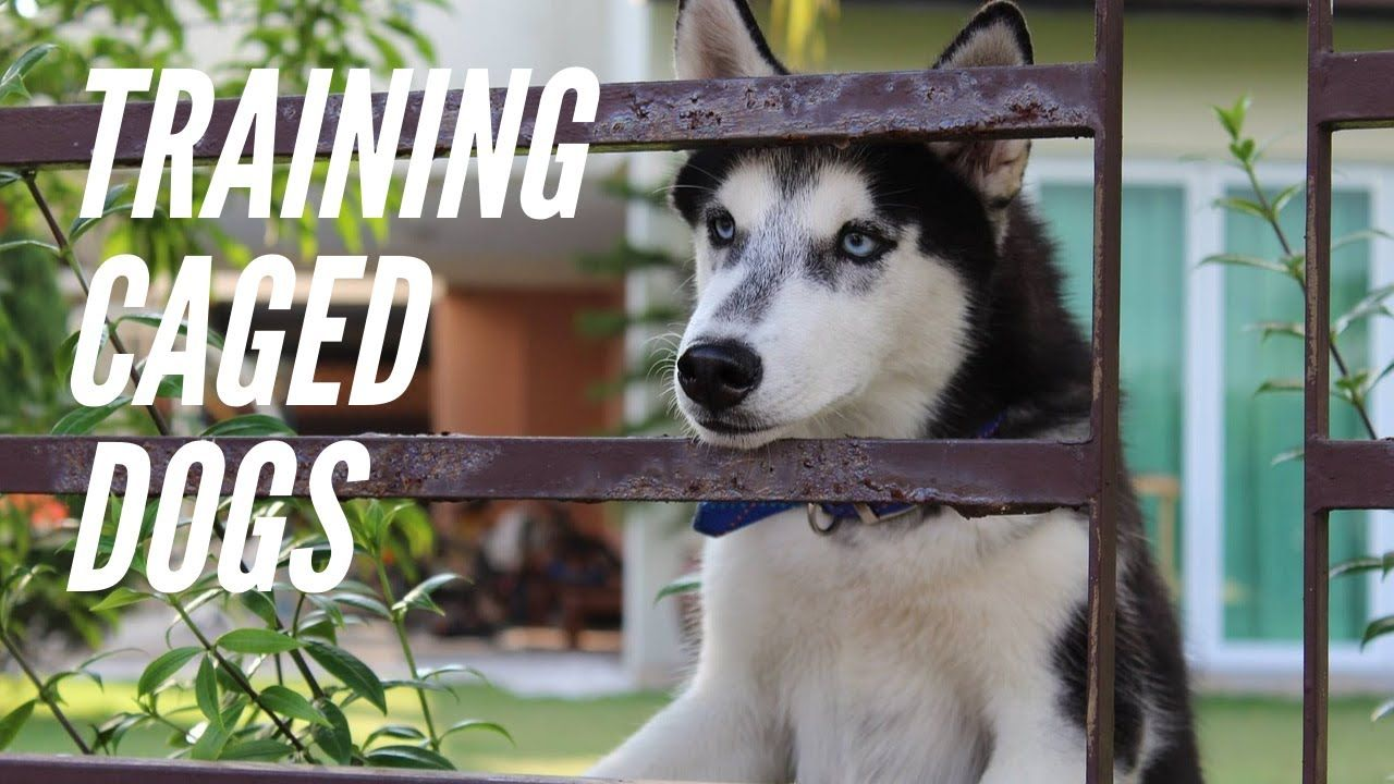 training caged dogs when the cages are full, kill the dogs!