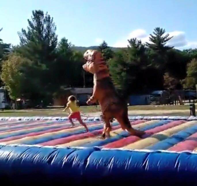 d463bc338c5a9a6d6572126a4bf6d94b this gif combines inflatable dinosaur costumes, a jump pad, and is