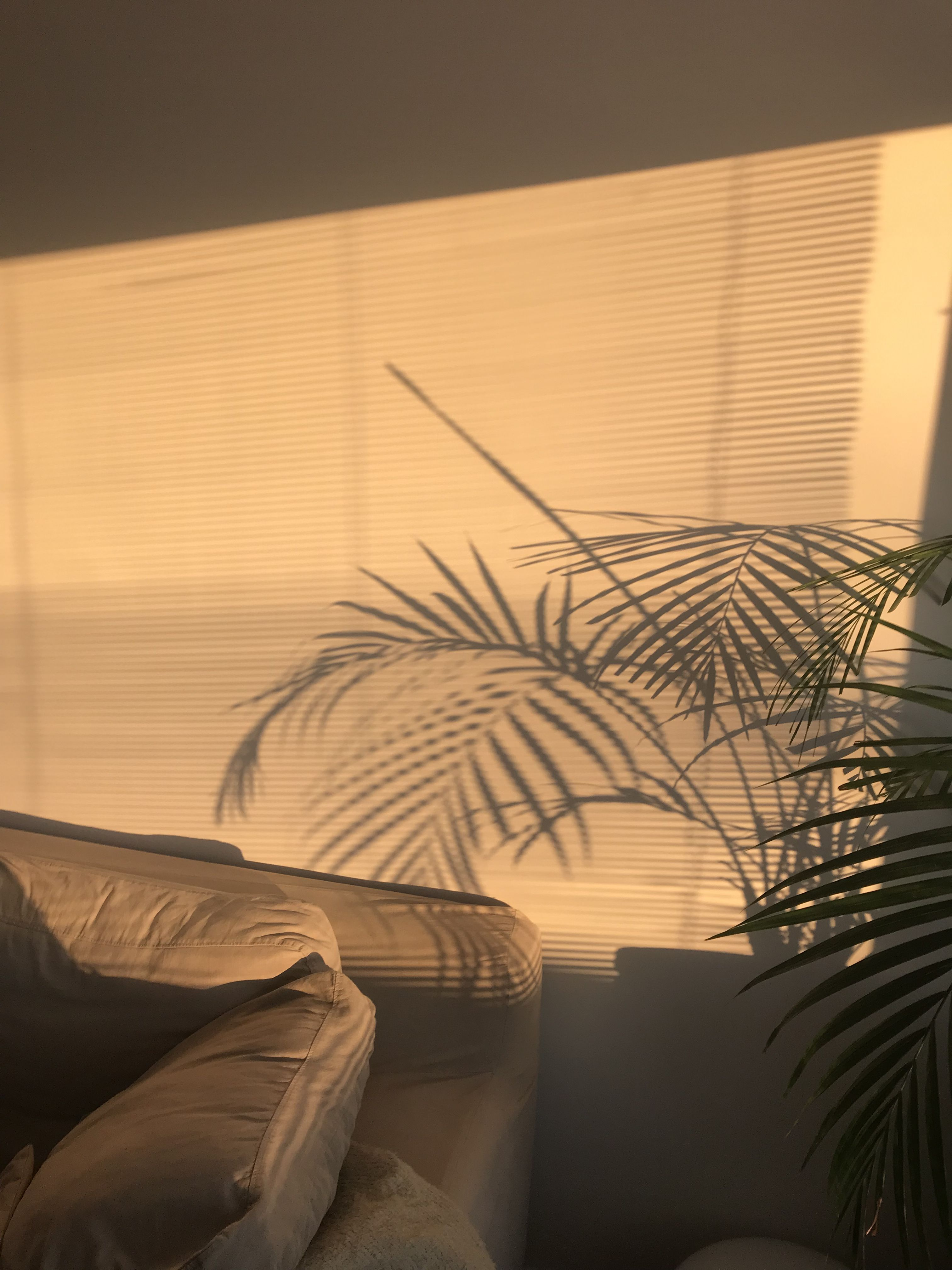 Best Aesthetic Golden Hour Yellow Chill Photography Goldenhour 400 x 300