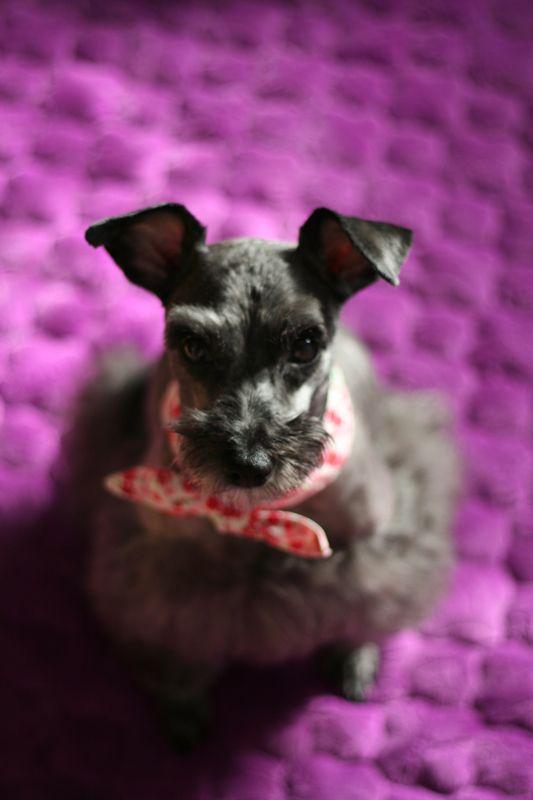 luxury dog ㅋㅋㅋ