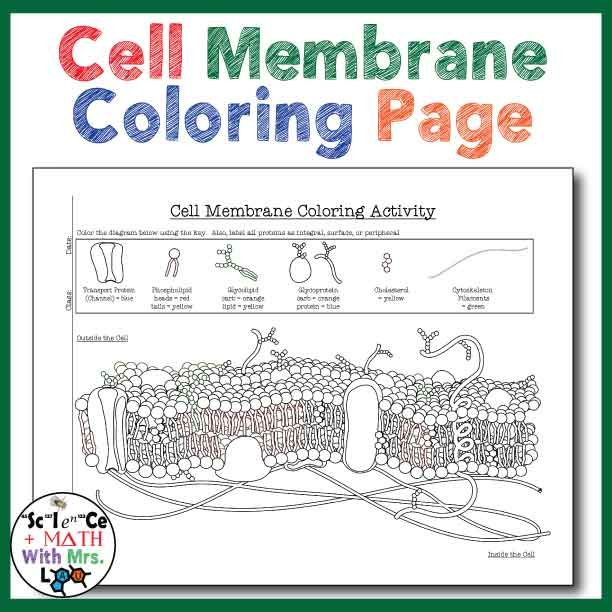 Cell Membrane Coloring Activity Help Students Identify Key