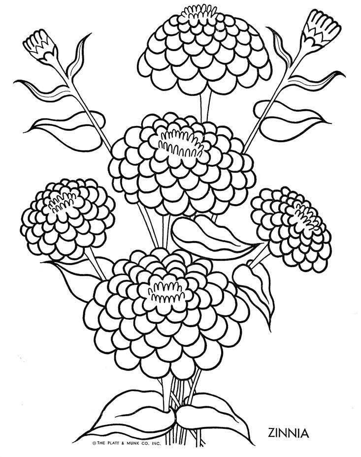 Flowers To Color Fritzi Brod Illustrator Platt And Munk 1951 Gallery Link File Columns 2 Size Medium Ids Flower Coloring Pages Floral Drawing Coloring Pages