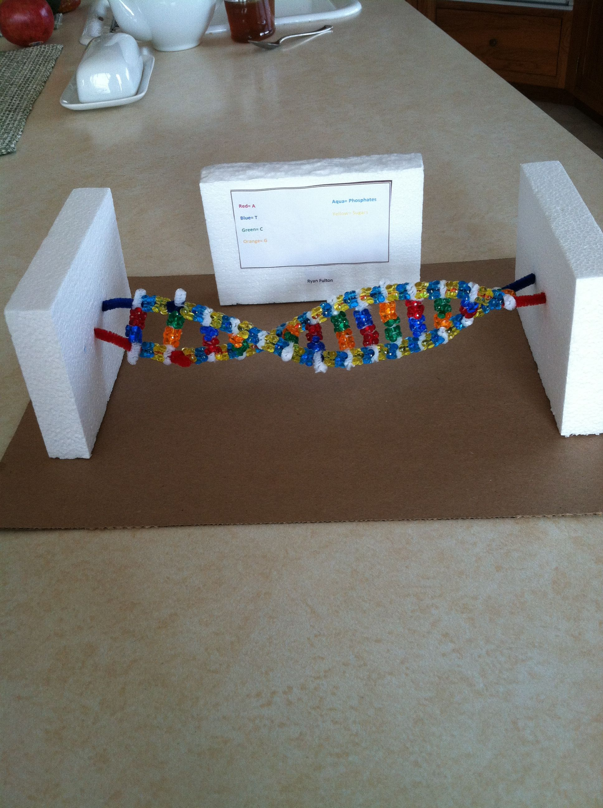 dna double helix by ryan 7th grade science project for my