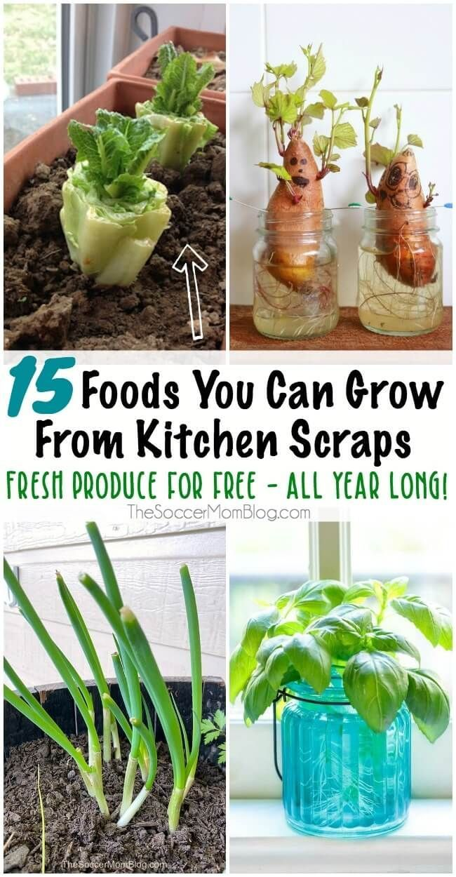 15 Foods You Can Regrow From Kitchen Scraps for Fresh Produce All Year