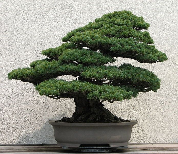 Making A Small Japanese Garden   Bonsai Trees In Japanese Prints U2013 Small Is  Beautiful