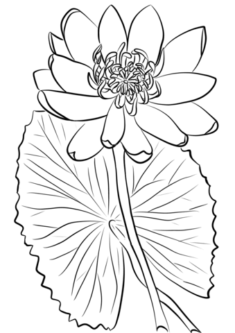 Click to see printable version of Red Water Lily Coloring page ...
