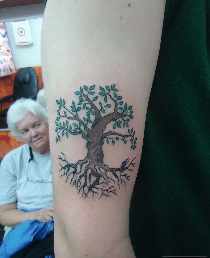Árbol de tronco y raíces fuertes