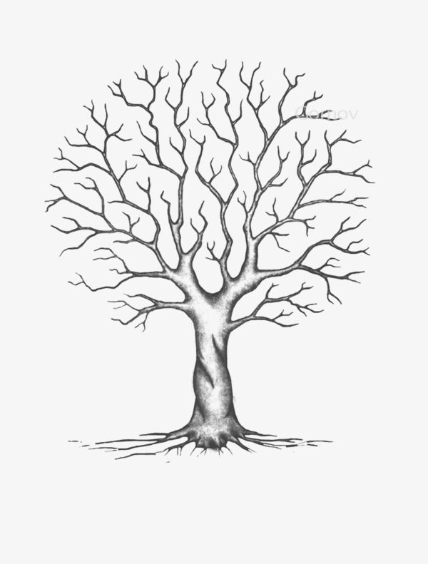 Arboles sin hojas, Los árboles, Cartoon Tree, Los árboles Imagen PNG