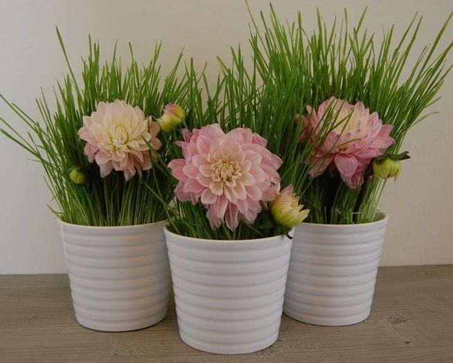201 & Flower Pot Wedding Centerpieces | Ideas for the wedding ...