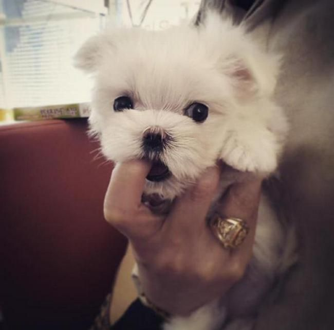 Youngjae and Mark bought a dog! It's a male ....His name is Heart (from the petshop) but GOT7 members named him Coco.