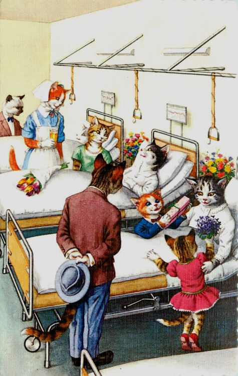 Cats Hospital! | Katze malen, Lustige katzen, Katzen