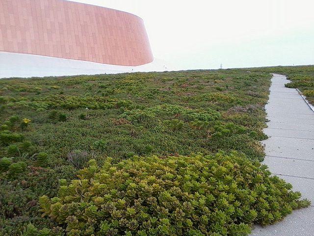 Music City Center Green Roof Green Roof Urban Heat Island Rooftop Garden