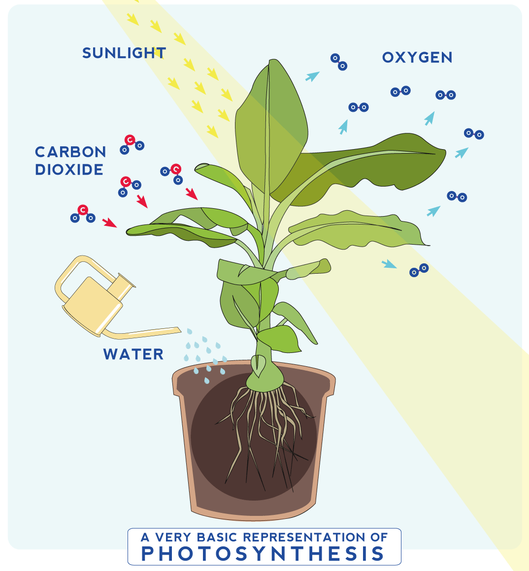 A Very Basic Representation Of Photosynthesis Infographic