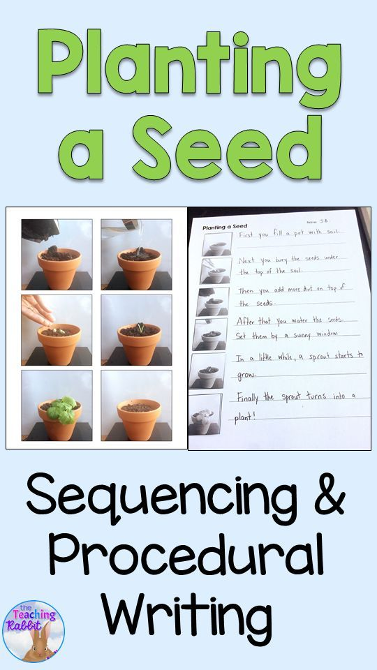 This sequencing activity comes with pictures of a plant at 6 stages (soil, seed, putting dirt on top, watering, sprouting, and full grown plant). It can be easily differentiated based on the level of your students. Students can create a procedural writing page or even a book! Makes a great writing activity for spring!  #spring #writing
