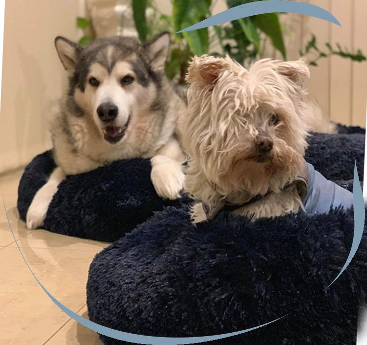 Calming Pet Beds Australia Pupnaps in 2020 Pet beds