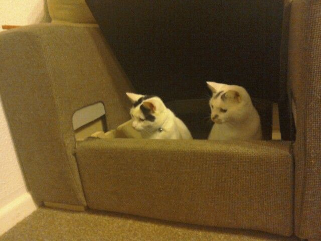 Hello? Anyone there? Want to come sit inside an armchair with us???