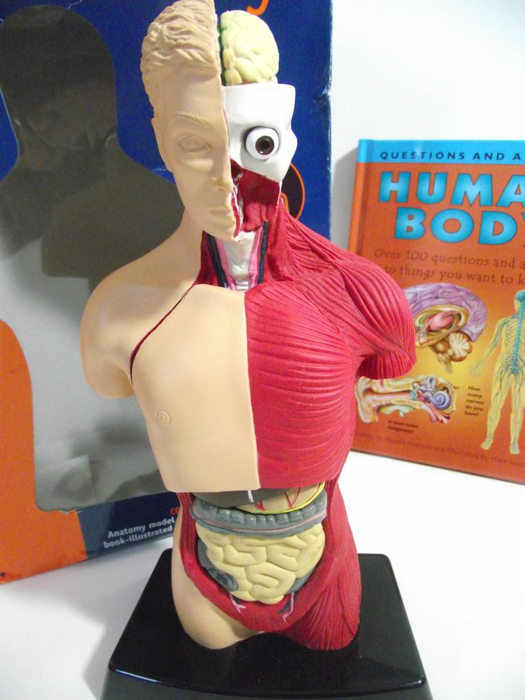 See how the human body works. Has detailed removable organs. Sold ...