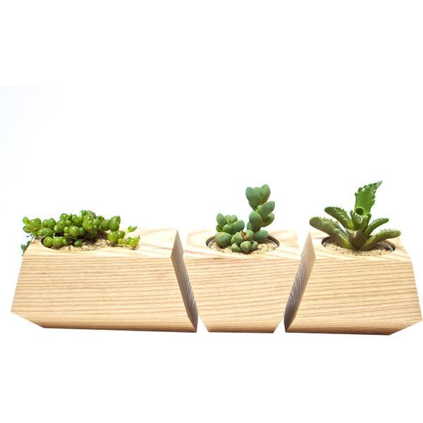 Dot & Bo 3 Pc. Solid Fir Wood Planters (€53) ❤ liked on Polyvore featuring home, outdoors, outdoor decor and succulent planter