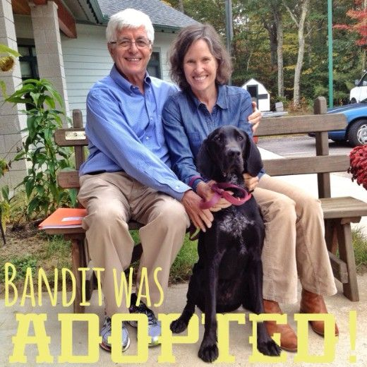 Bandit found his forever home and it was smiles all around!
