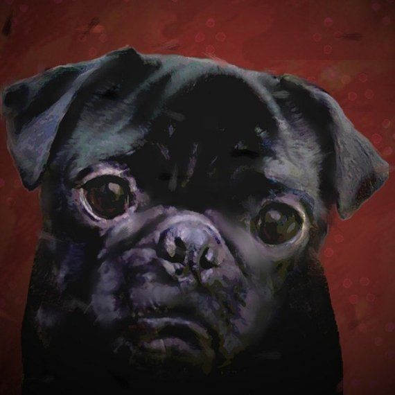 6 x 6 Pug Portrait by verybestdog on Etsy, $50.00