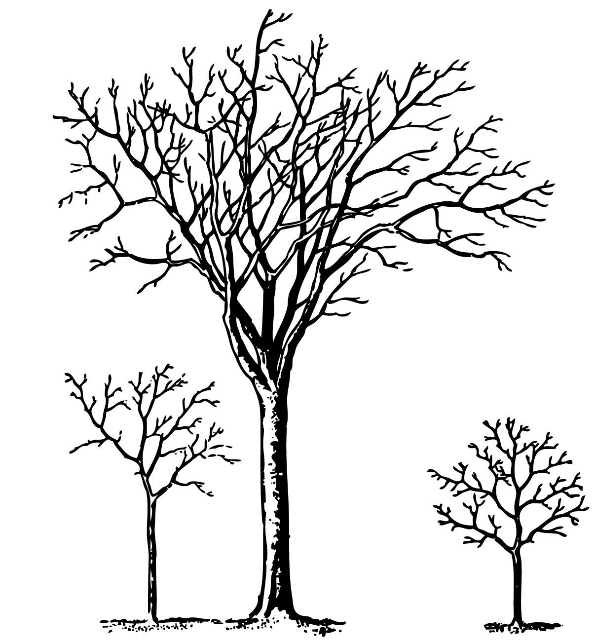 black and white clip art of forest trees vintage halloween clip art spooky trees the graphics fairy [ 1206 x 1303 Pixel ]