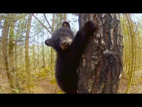 Top 5 Funniest Animal Outtakes BBC Earth in 2020