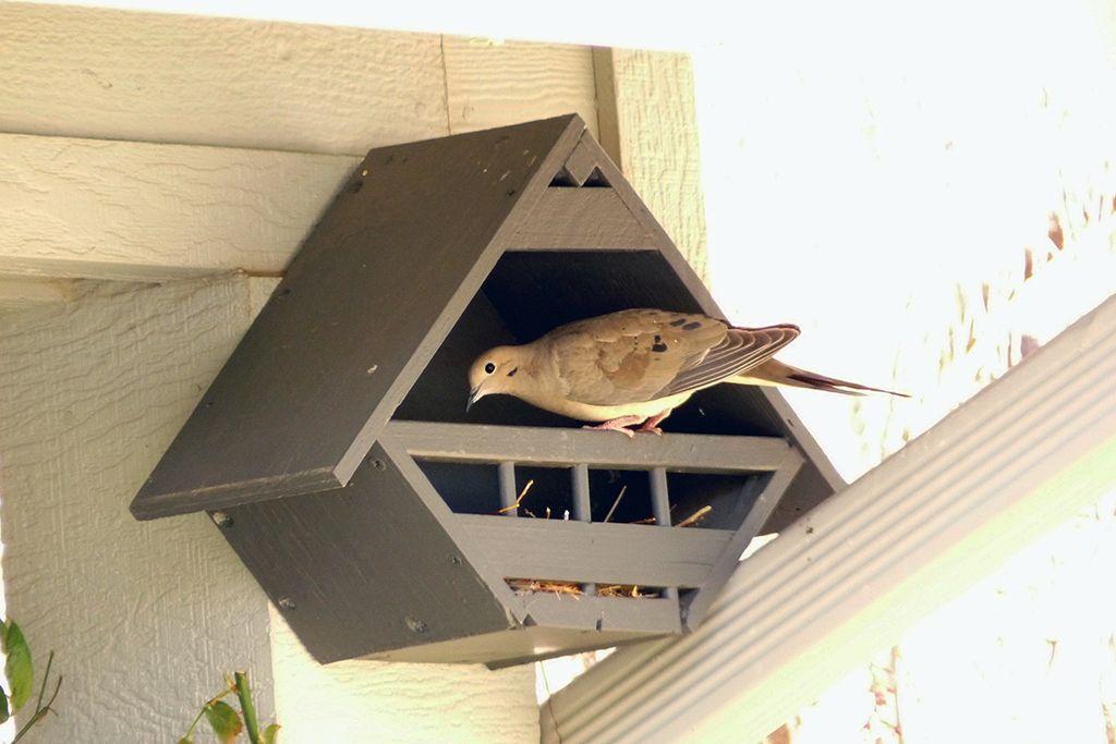 Doves love their Lovey Dovey Birdhouses