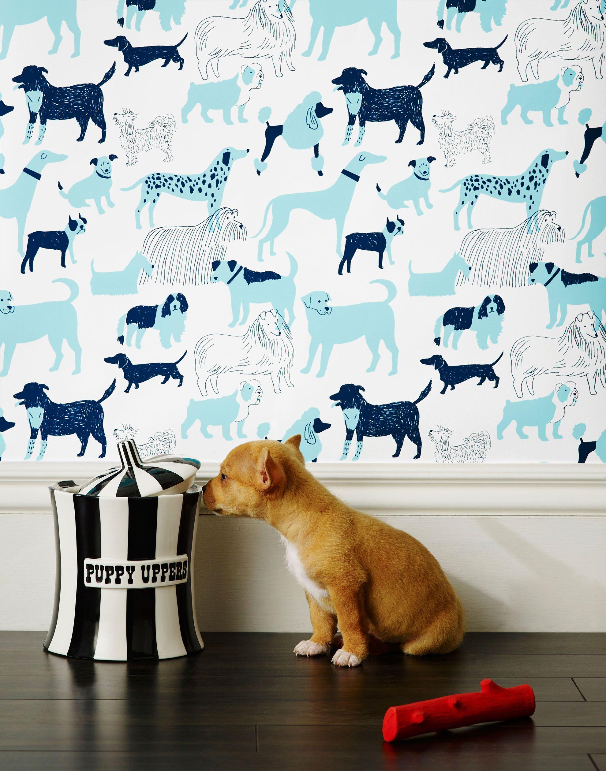 Dog Park (Blue), Roll Dog rooms, Dog wallpaper, Dog park