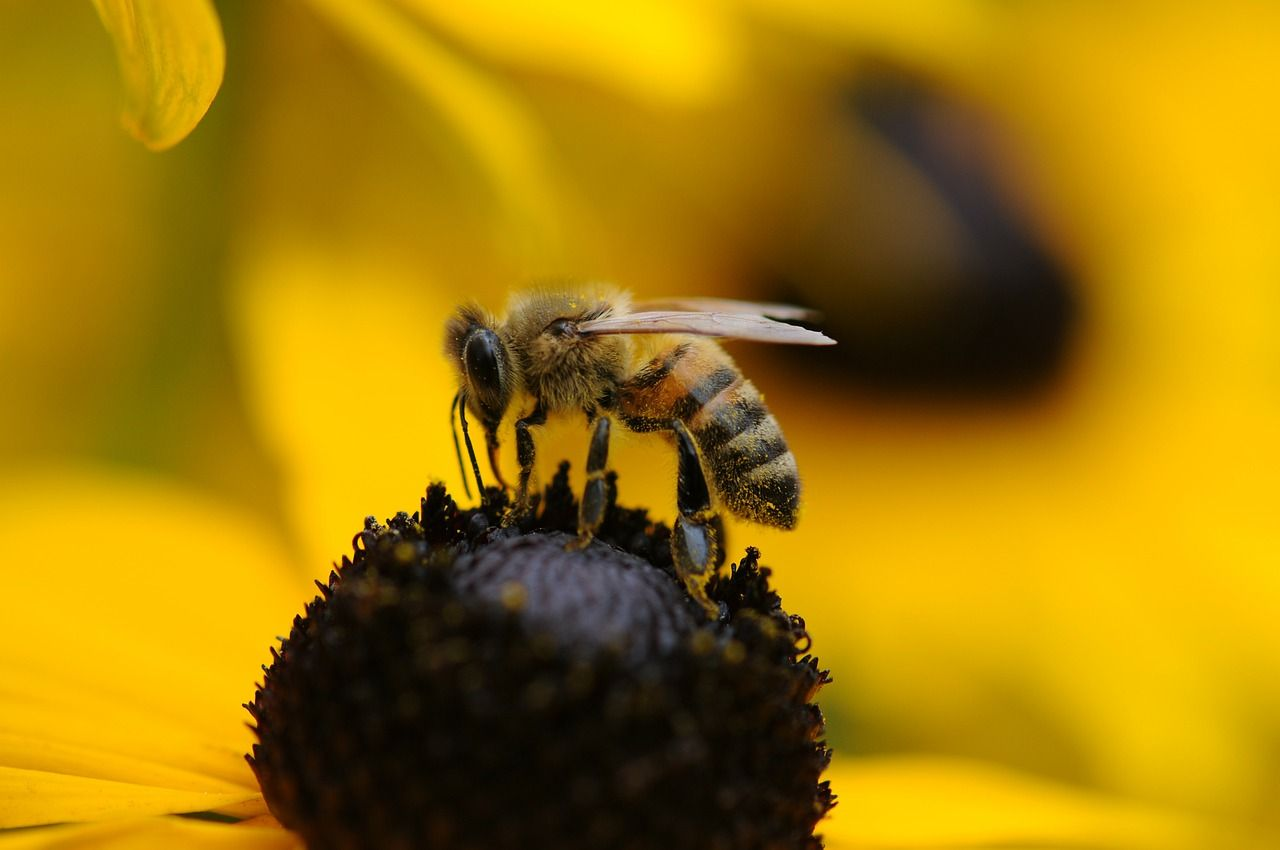National initiative Bee Friendly created to encourage people to help pollinators