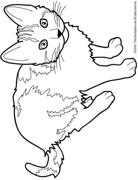 9 Heart Tastic Crafts For Kids Cat Outline Coloring Book Pages