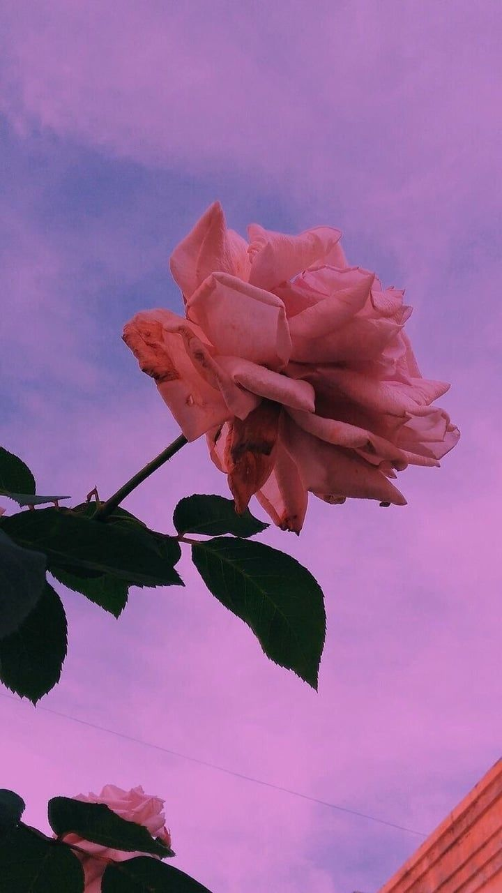 Flower Aesthetic Sky Flowers Background Tumblr Rose Colors Https Weheartit Com Entry Fonovye Izobrazheniya Fotografii Zadnih Planov Zhivopisnye Pejzazhi
