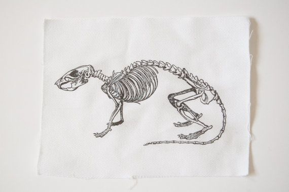 Line Drawing Rat : Rat skeleton sew on patch rodent bones skull by somerabbits