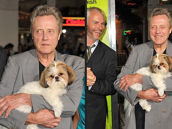Bonny The Shih Tzu Has A Field Day At Seven Psychopaths Premiere