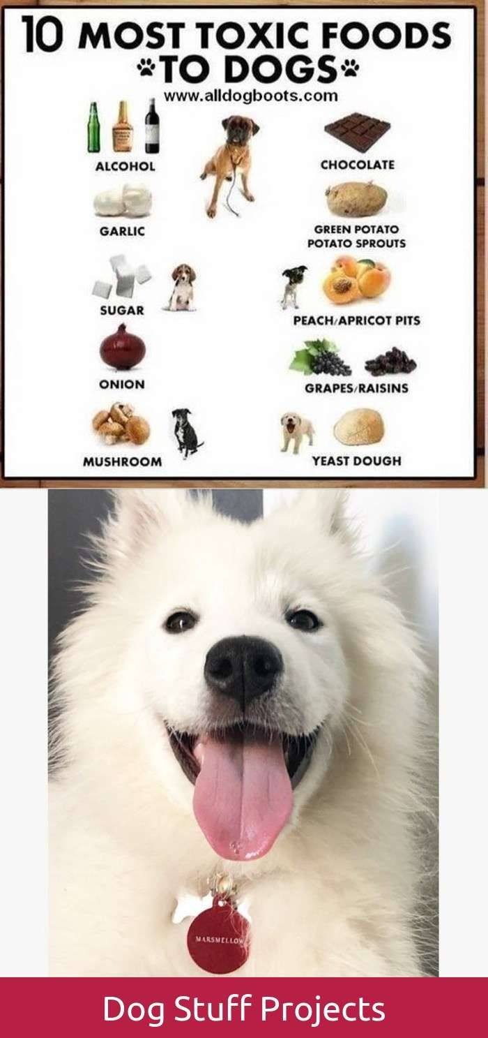 Reliable funny dog agility crate training dogs pinterest dog